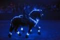 """Pferde-Show """"Kristallion"""" mit Artisten vom Showteam Grundler im Haupt- und Landesgestüt Marbach 2012"""