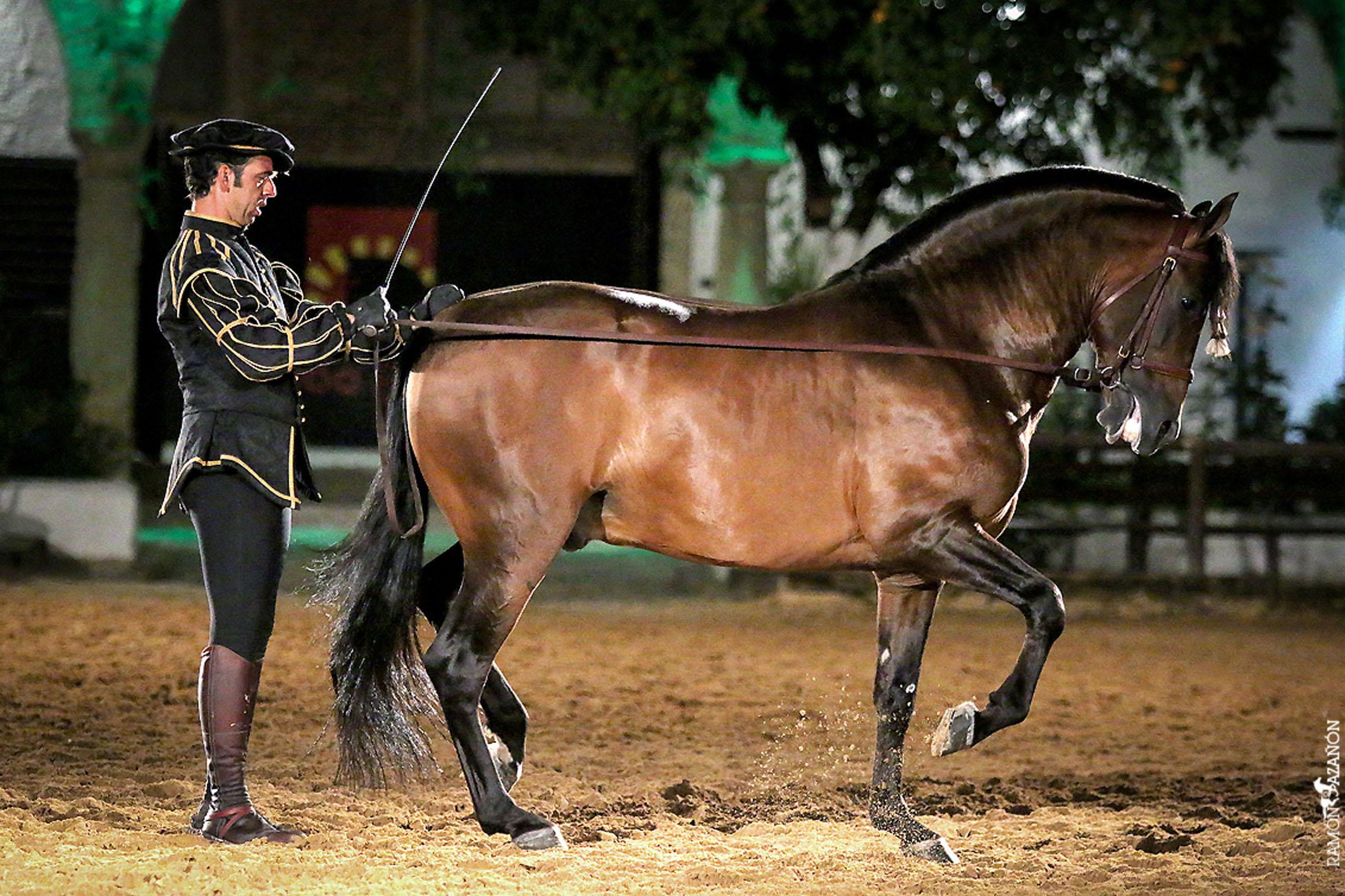 Cordoba-Equestre1_Home