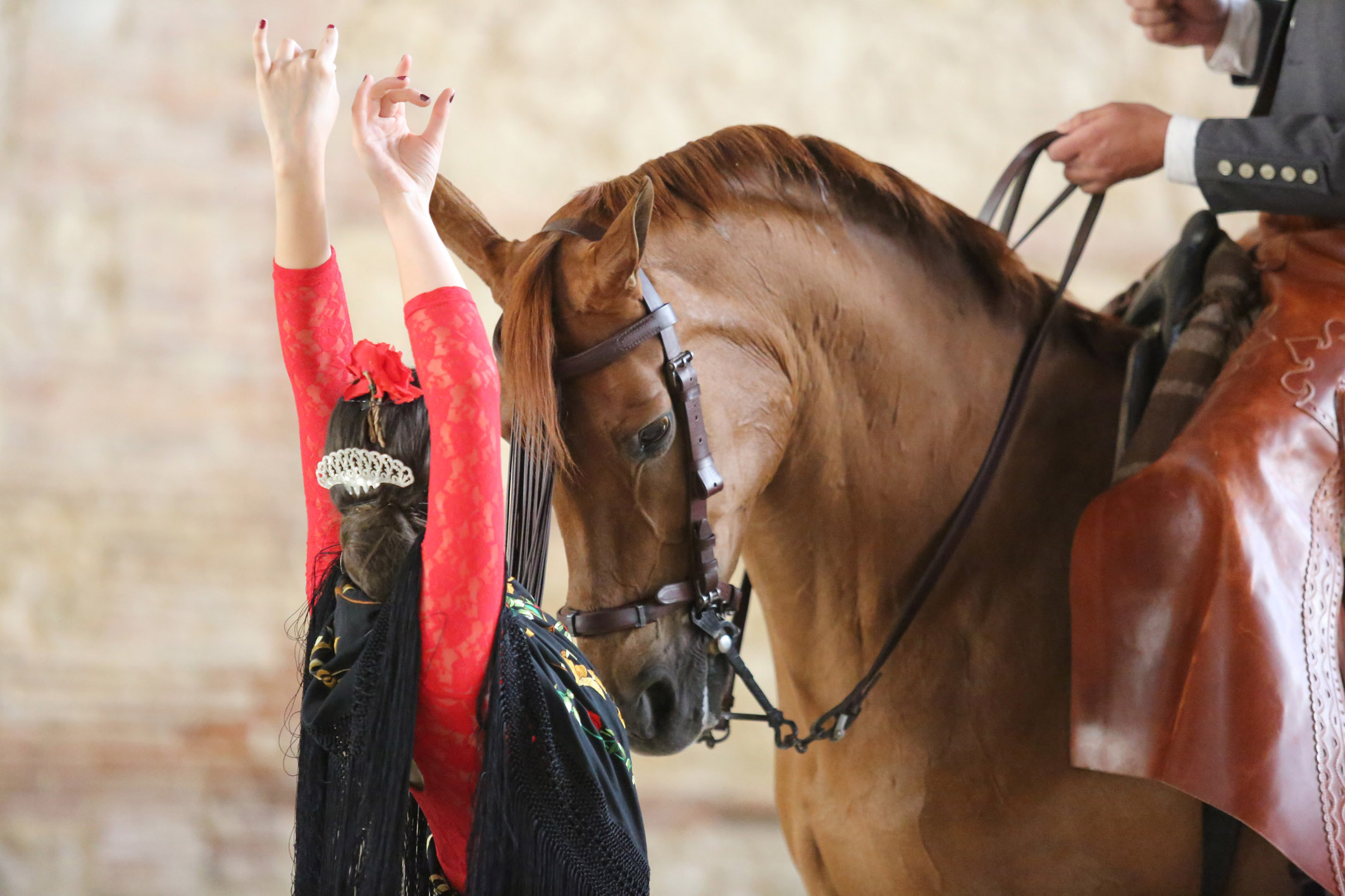 Cordoba-Equestre2_Home